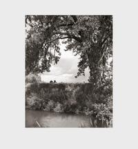 Sullivan, Constance: Cottonwoods.