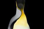Brad Wilson: King Penguin #4, 2019