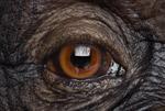 Brad Wilson: Chimpanzee #17, Los Angeles, CA, 2016