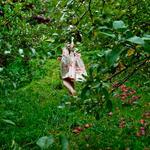 Cig Harvey: The Orchard, Warren, Maine, 2012