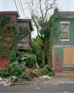 Daniel Traub: Tree, North Fifteenth and West Boston Street, North Philadelphia, 2010