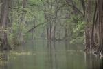David H. Gibson: April 12, 2009, 9:06 AM