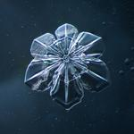 Douglas Levere: Snowflake 2014.02.09.011