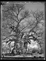 Elaine Ling: Baobab, Tree of Generations #10