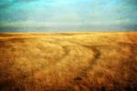 Frank Grisdale: Tracks on Sacred Land (S. Alberta)