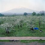 Jane Alden Stevens: Orchard and Mt. Iwaki, Spring, Aomori Prefecture