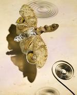 Jo Whaley: <i>Fulgora laternaria</i>
