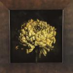 Kate Breakey: Chrysanthemum