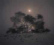 Kate Breakey: Tree Stories