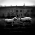 Keith Carter: Birth of Photography