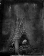 Keith Carter: Tree Roots, 2014
