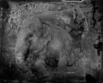 Keith Carter: Two Elephants, 2014