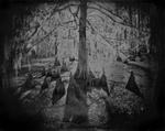 Keith Carter: Cypress Swamp #1, 2013