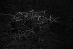 Ken Rosenthal: Rooted