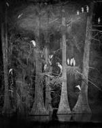 Kindred Spirits: Keith Carter – Nesting Tree Study #2, 2012