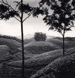 Michael Kenna: Tea Estates, Study 1, Munnar, India, 2008