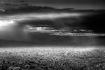 Mitch Dobrowner: City and Light, 2012