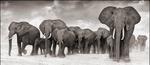 Nick Brandt: Elephants On The Move, Amboseli, 2006