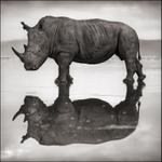 Nick Brandt: Rhino on Lake, Nakuru 2007
