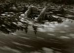 Peter Merts: Drifting Pond Weeds, 2000