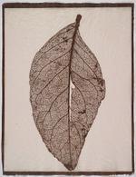 Susannah Hays: Skeletal Leaf (door), 1998