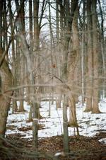 Terri Weifenbach: Woods 16, 2010