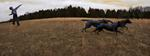 Tom Chambers: Fetch