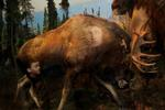 Traer Scott: Moose, 2010